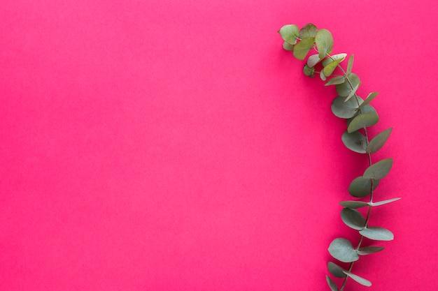 ピンクの背景に緑の葉小枝