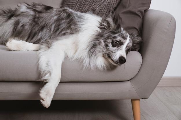 犬はソファでくつろいで