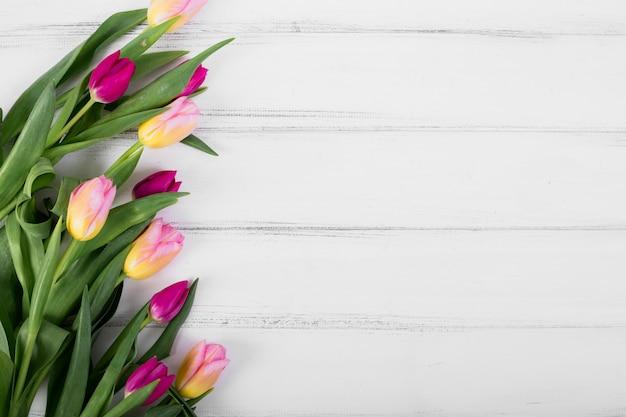 Разноцветные тюльпаны в ряд