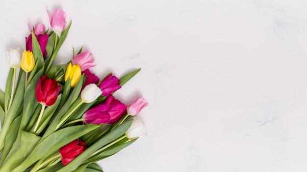 カラフルなチューリップの花がコンクリートの背景の隅に配置