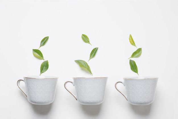 Зеленые листья над тремя чашками чая на белом фоне