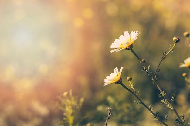 白い咲く花のクローズアップ