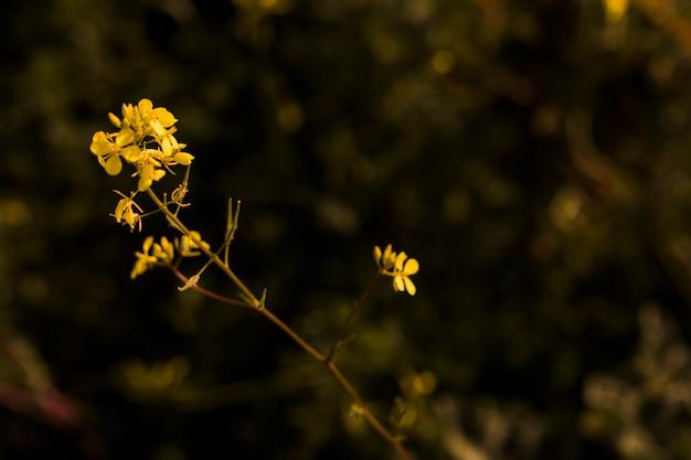 Цветущие маленькие желтые цветы