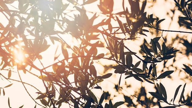 森の木の枝を通して輝く太陽