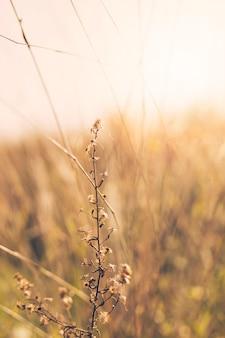 背景をぼかした写真の前に乾燥植物