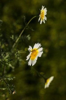 Крупный план белых цветов