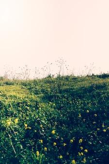 空を背景に緑の風景の眺め