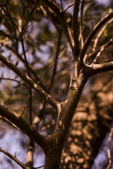 裸の木に日光