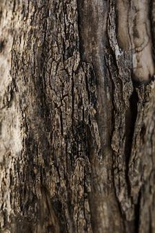 Конец-вверх старой текстурированной древесины