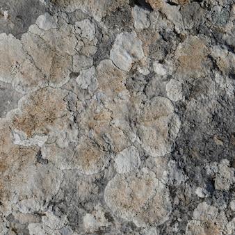 地衣類と岩のクローズアップ