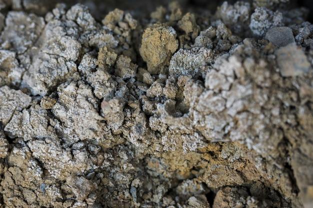 コケや菌と岩のクローズアップ