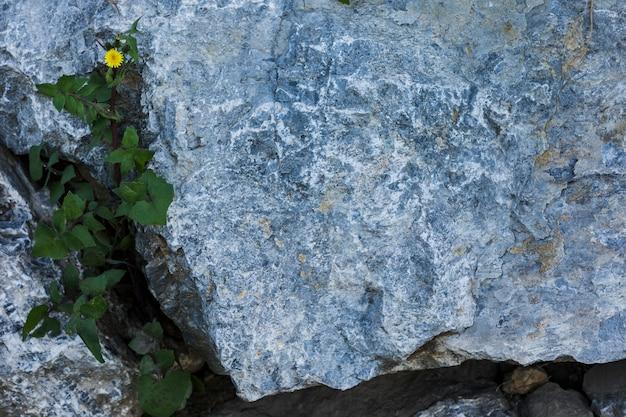 岩で成長している緑の葉の立面図