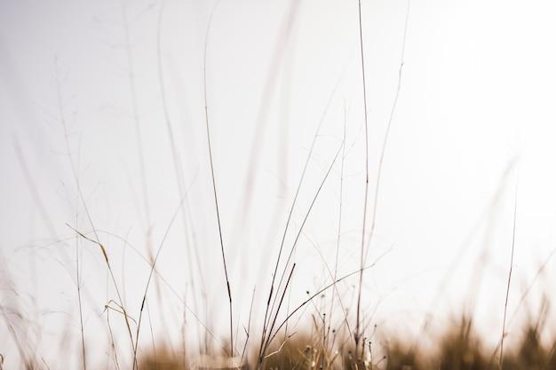 ぼやけて背景の前に草します。