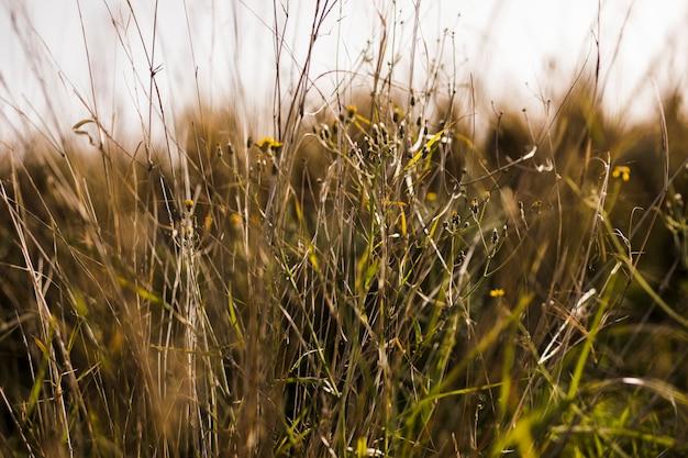 緑の芝生のクローズアップ