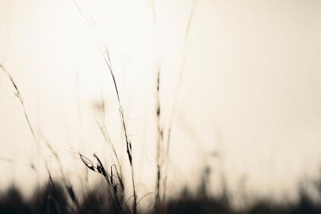 劇的な空に対してシルエットの草のクローズアップ