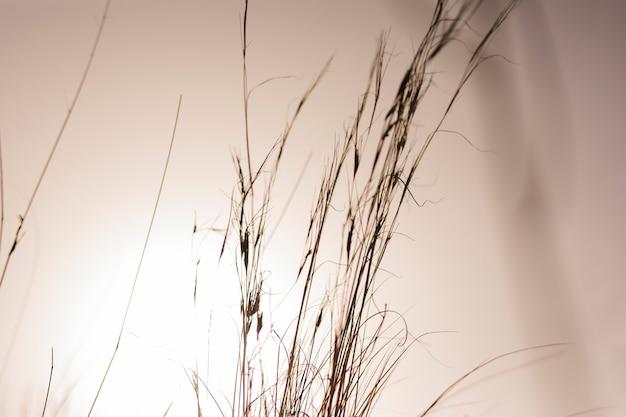 Вид травы в закат