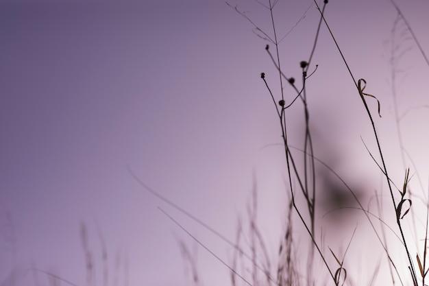 日没時に草のシルエット