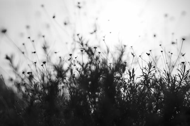 空を背景の花畑のシルエット