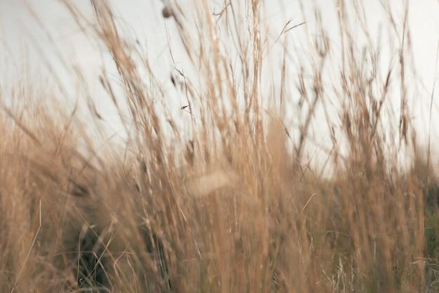 背の高い草の眺め