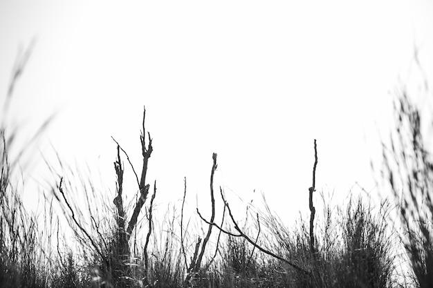 空に対して植物のシルエット