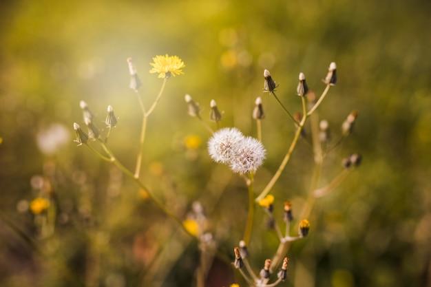 日光の芽と白い花のクローズアップ