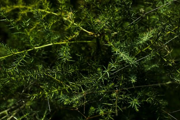 Вид сверху зеленого растения
