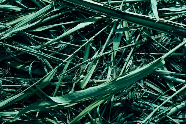 Зеленая трава в фоновом режиме