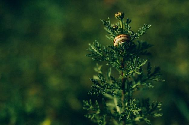 カタツムリと緑の植物のクローズアップ
