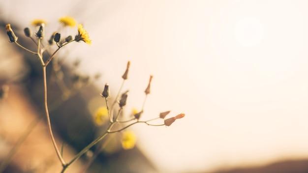 芽と黄色い花のクローズアップ