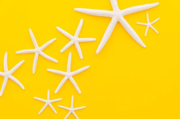 Белые морские звезды на желтом столе