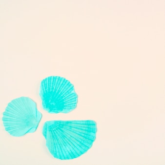 Окрашенная бирюзовая морская раковина морского гребешка на углу бежевого фона