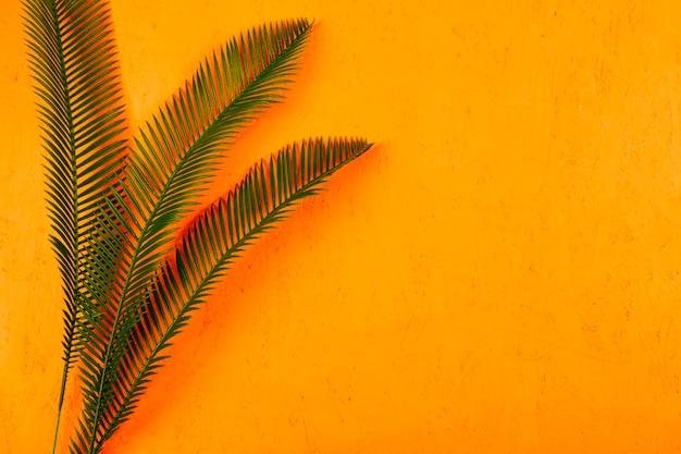 黄色の織り目加工の背景に対してサンゴ影と緑のヤシの葉
