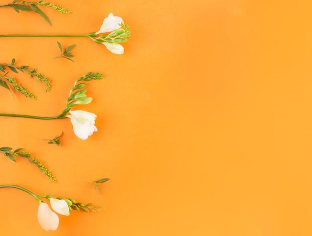 白い花の組成