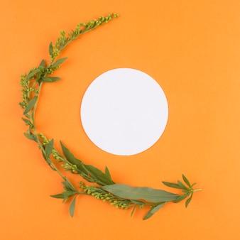 緑の植物の近くの白い丸