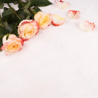 白いテーブルの上の花びらとバラの花