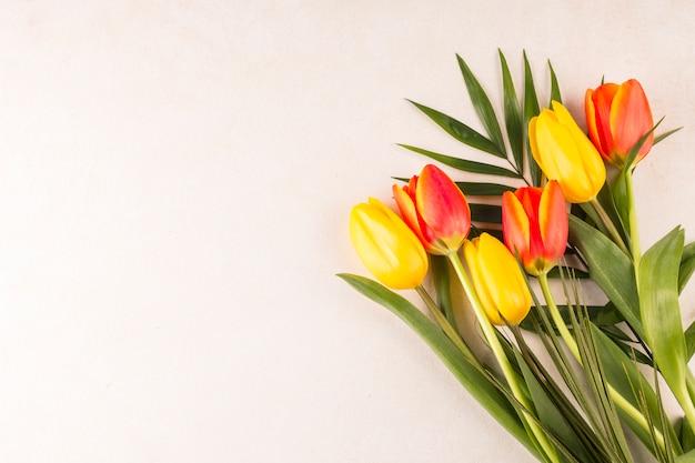 チューリップとベージュ色の背景に束の葉