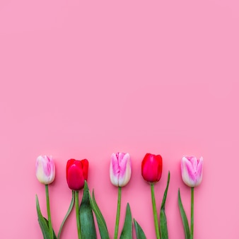 Ряд красочных свежих цветов