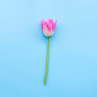 茎にピンクの柔らかいチューリップ