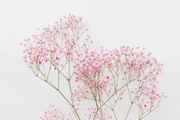シンプルなピンクの花の小枝