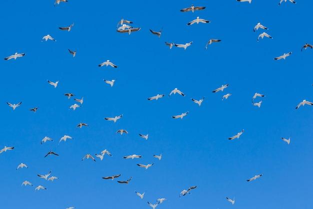 鳥の群れが飛んで