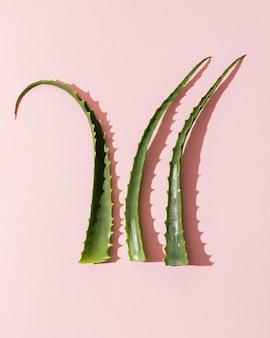 アロエベラの葉
