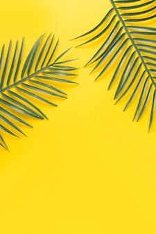 緑のエキゾチックな植物の葉