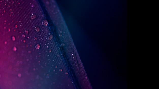 黒い背景に対して紫色の羽の表面の滴