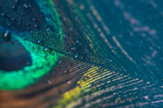 孔雀の羽の抽象的なクローズアップの背景に新鮮な水滴