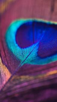 カラフルな光沢のある孔雀の羽の表面のフルフレーム