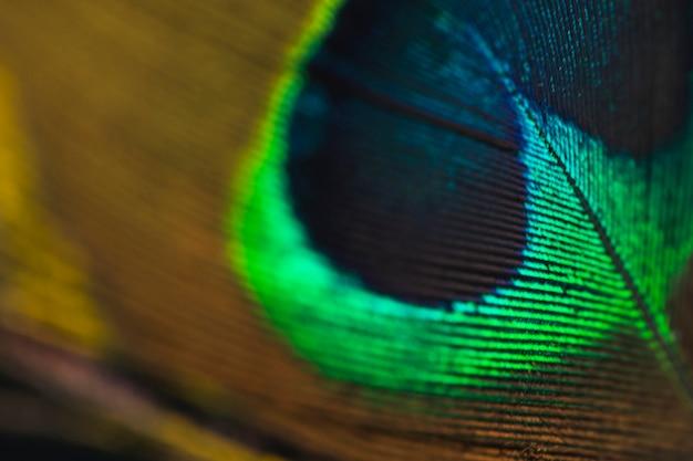 ぼやけている孔雀の羽の背景のフルフレーム