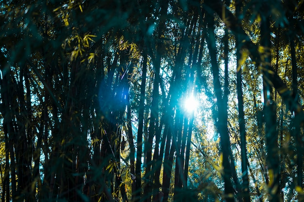 Бамбуковый лесной пейзаж