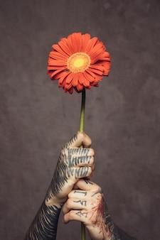 灰色の壁に対して入れ墨をした新鮮なガーベラの花を持つ男の手のクローズアップ