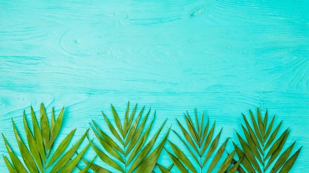 ボード上の植物の葉