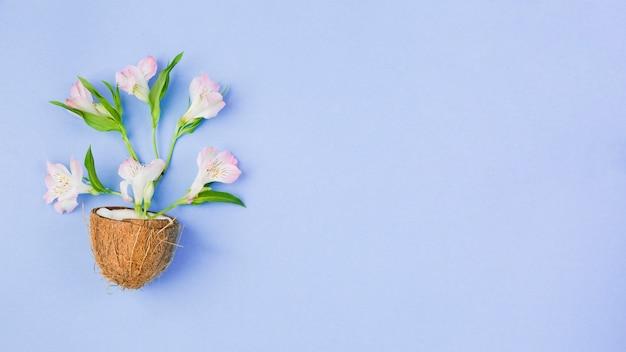 Кокос с тропическими цветами